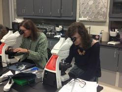 Conservators examining fibers at USF's new Schiavo laboratory