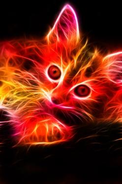 Fractal-Kitten