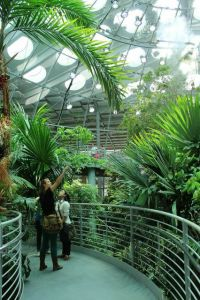 Visiting the California Academy of Sciences