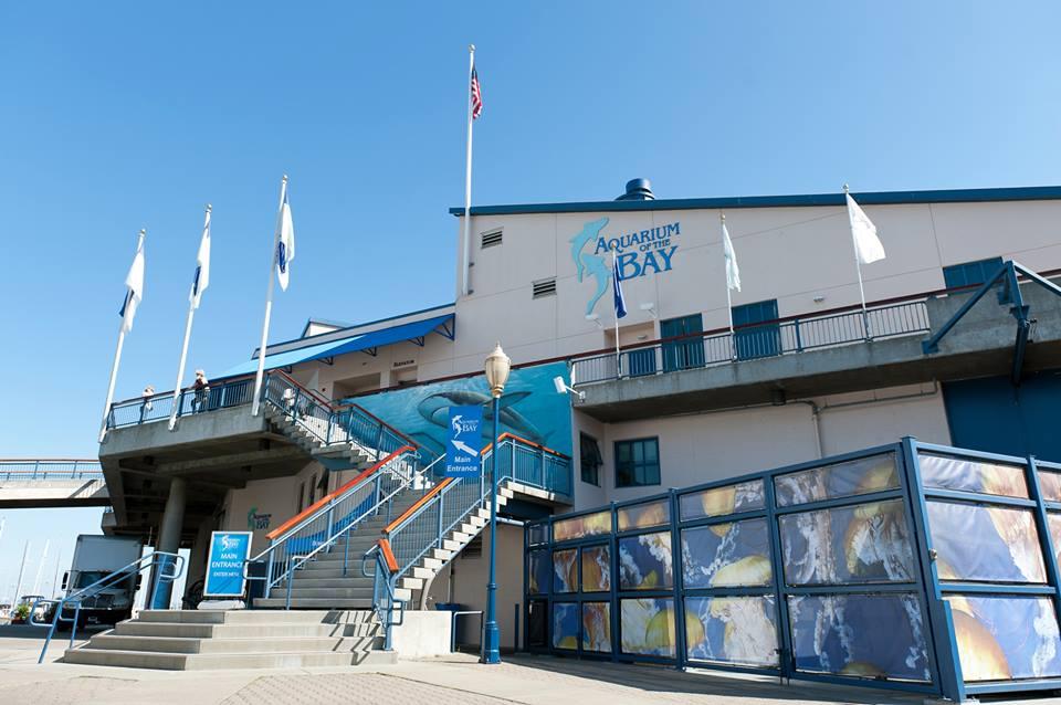 Intern Connectivity Aquarium Of The Bay Usf 39 S Museum Blog