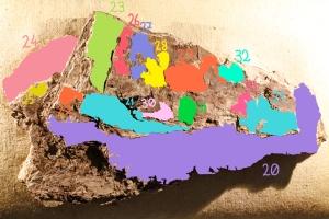 Color-coding the outlined specimens. Photo credit: Fahimeh Rahravan