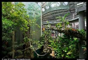 The California Academy Science's popular four-story tropical rainforest exhibition